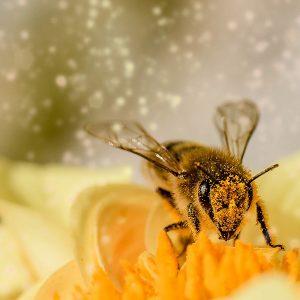 Curso de posgrado nutrición y salud de las abejas
