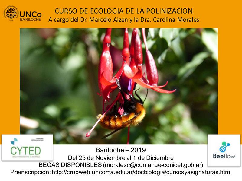 Morales Difusión Curso Ecología polinización 2019 solatiina