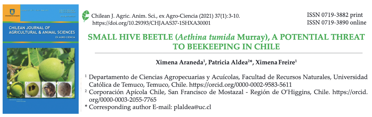 araneda Small hive beetle solatina paper abejas