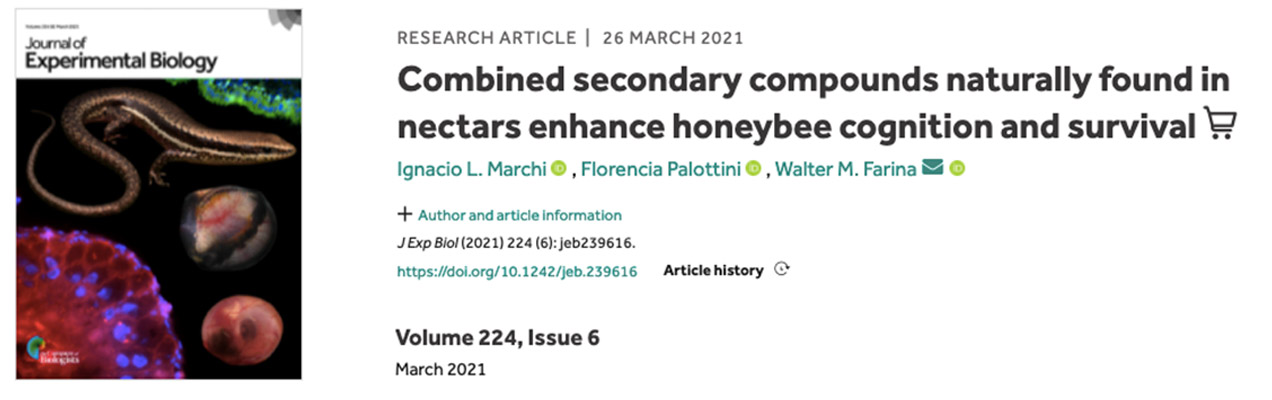 Marchi nectar honey bee 2021